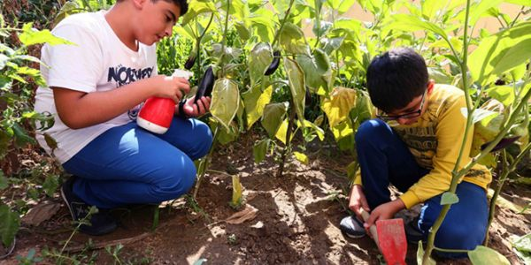 Enderunlu Öğrenciler Organik Sebze Ve Bitki Yetiştirdi