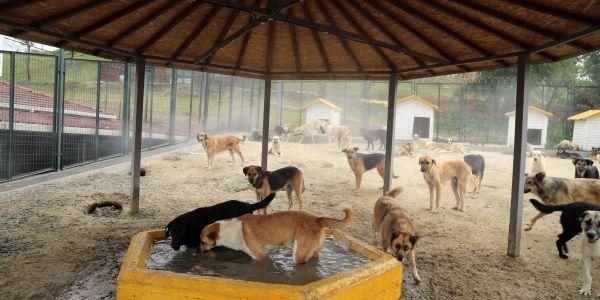 """""""Eyyam-ı Bahur sıcaklarına karşı sokak hayvanları buharla serinletiliyor"""""""