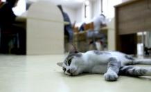 Paşa isimli kedi kütüphanenin maskotu oldu
