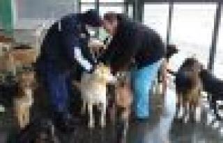 Bağcılar'da  Sokak Hayvanları Üşümüyor