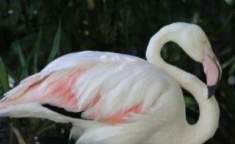 Dünyanın en yaşlı flamingosu öldü